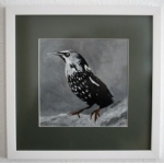 Colly Birds : Starling