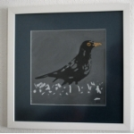 Colly Birds : Blackbird