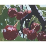 Kentish Cherries